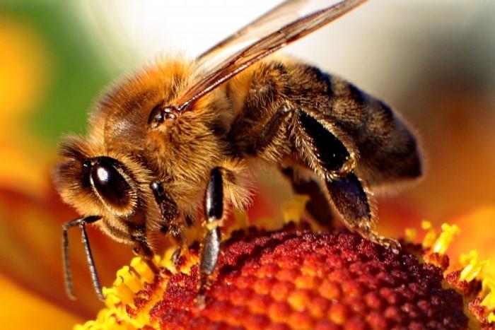 Biológia včiel