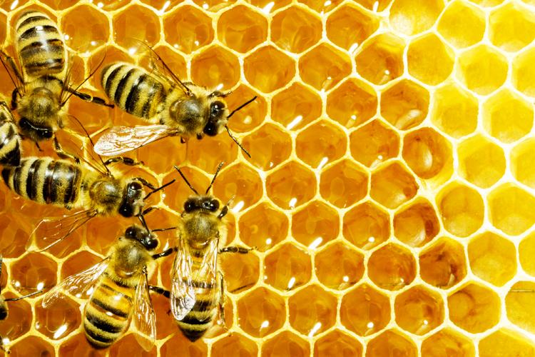 Včelia pastva a výroba medu